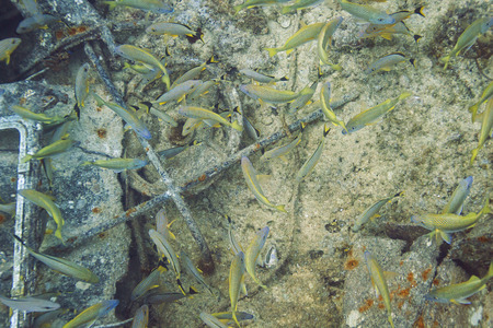 reefscape: mulitple species of fish living in a shipwrecks