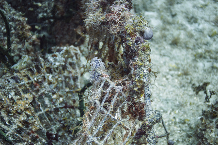 polyps: coral and polyps growing on a wire cage Stock Photo
