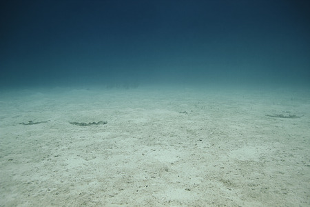 brilliant   undersea: landscape view of the ocean deprive of life Stock Photo