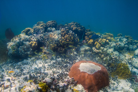 small coral reef filled with fish live Stock Photo