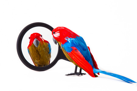 Parrot puppet looking at itself in a hand mirror