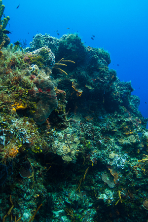 reefscape: Large coral mountain filled with colorful life