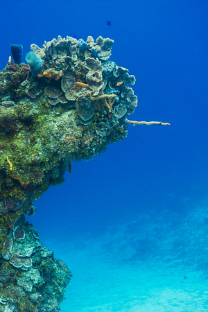 Coral reef growing in a shape of a arm