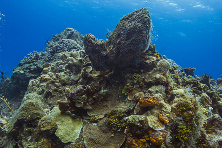 large reef made out of multiple spieces of sea sponges