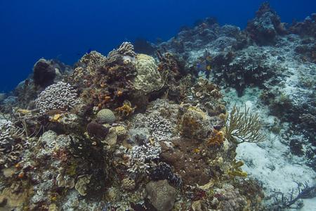 Coral reef with minor bleaching, in Caribbean sea Stock fotó