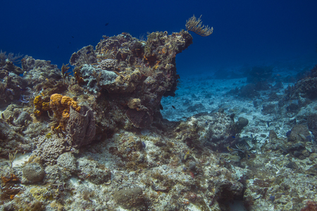 Large coral reef in the Carribean reef