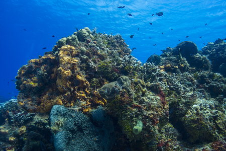 Large section of a colorful coral reef of the shore of Cozumel Stock Photo