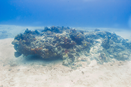 Coral reef in the atlantic ocean with glowing effect