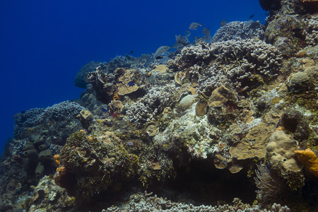 Large coral reef in the Carribean reef with multiple fish species Stock Photo