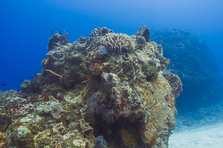 large outcrop of coral deep underwater