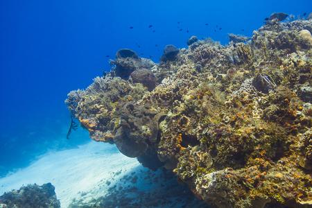 coral reef in caribbean ocean
