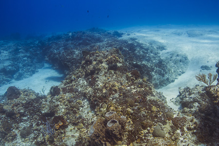 landscape image of a coral reef at the bottom of the sea Stock Photo