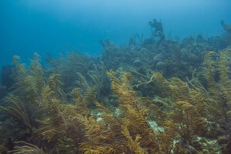 Landscape view of an Atlantic ocean reef