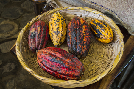 red, yellow and orange cocoa bean in a basket