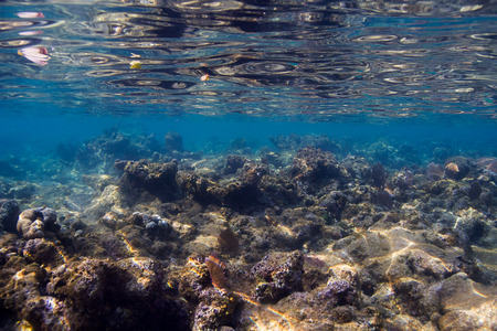 sharp edge shallow reef off the coast of Roatan