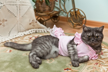 Kitty in a pink dress Stock Photo