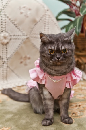 Kitty in a pink dress Archivio Fotografico