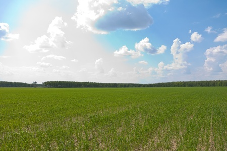 Green field and the dark blue sky Stock Photo - 10552886