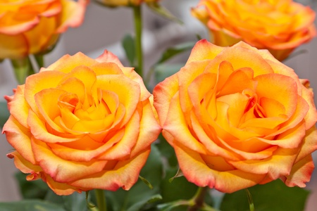 Bouquet of yellow roses photo
