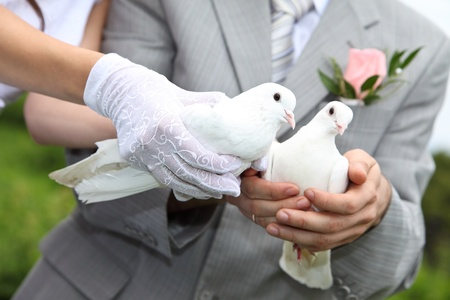 buttonhole: Pigeons in hands of a newly-married couple