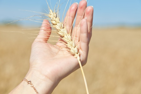 Rye in a hand photo