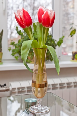 Pink tulips in a vase photo