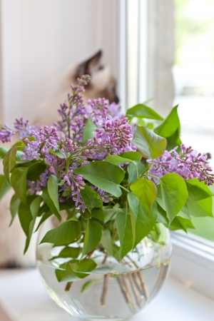 Lilac at a window Stock Photo