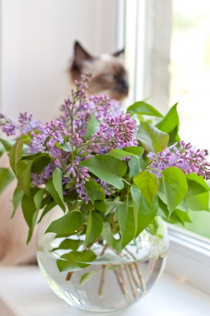 Lilac at a window photo