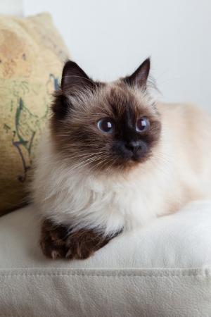 Portrait of a cat close-up