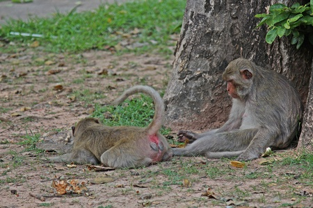 Animals,  The monkey are waiting from people who see them,  they live in KUM PHA WA PI park,  at UDONTHANI province THAILAND.