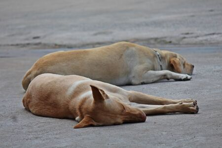 Two dogs crouch on the floor,  it both is tame.