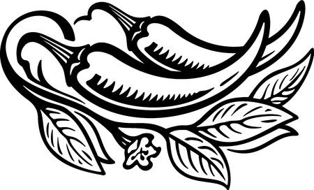 pepe nero: Pepper engrawing illustrazione immagine Vettoriali