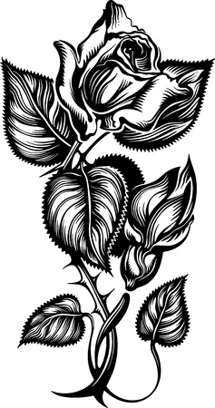 thorns: Rose engrawing picture  illustration Illustration