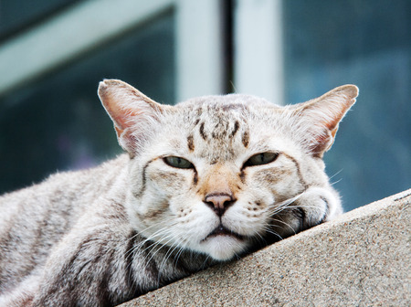 close up confidence of face stray cat watching camera on the roof of home Stock Photo