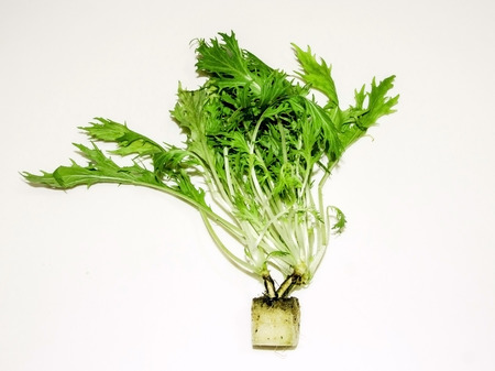 roquette: fresh wild rocket hydroponic on white background Stock Photo
