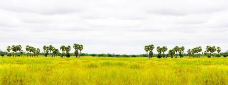 champ vert: green field in cloundy day