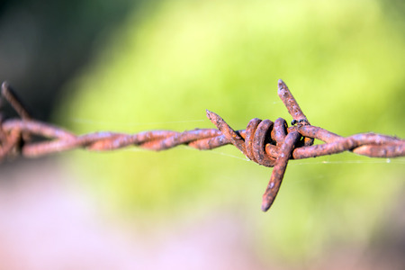 close up Rusty barb wire in blury background photo