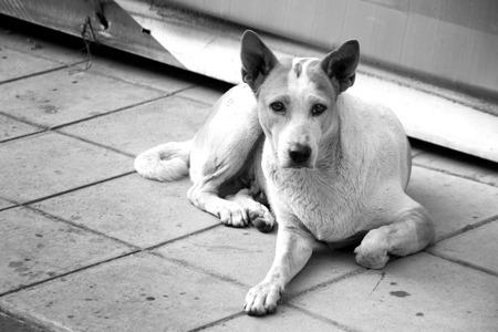 spiritless: stray dog on floor in Black and white