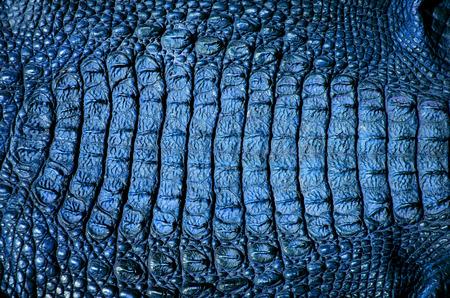 close up crocodile leather texture background in blue Reklamní fotografie