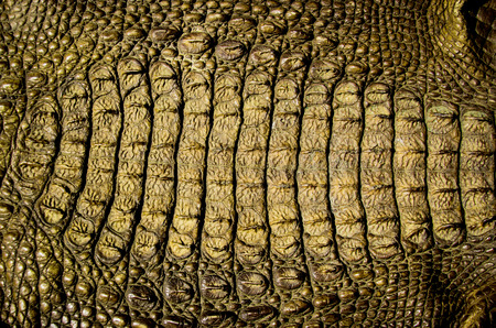 close up crocodile leather texture background in yellow photo