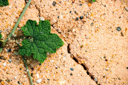 close up green ivy on sand