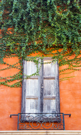 resplendence: old vintage window with ivy