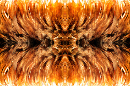 simetry: simetry close up brown fur from feather for abstract background