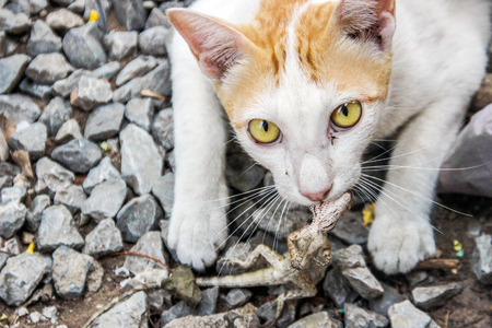grabing: close up eyes of cat catching lizard on ground