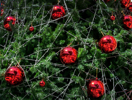 christmas tree ball: close up red ball decoration christmas tree for background Stock Photo