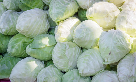 colfax: green and white cabbage on market fo sell Stock Photo