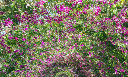 wedding backdrop: purple orchid archway for aroma walkway background