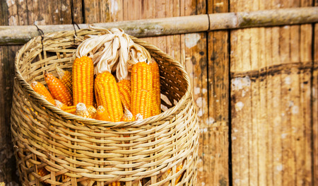 pannel: close up gold orange corn in basket haking on old bamboo pannel