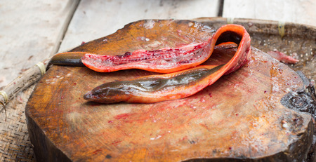 chevron snakehead: cooking exotic menu with snake fish on hardwood plate outdoor kitchen