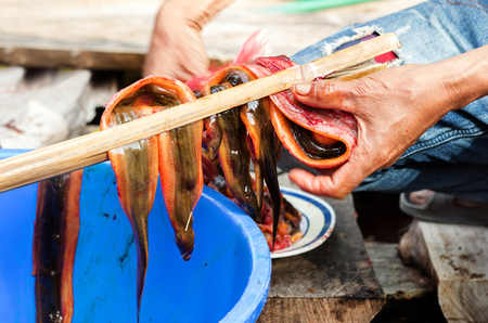 chevron snakehead: cooking exotic menu snake fish with red ant with bamboo stick for process Stock Photo